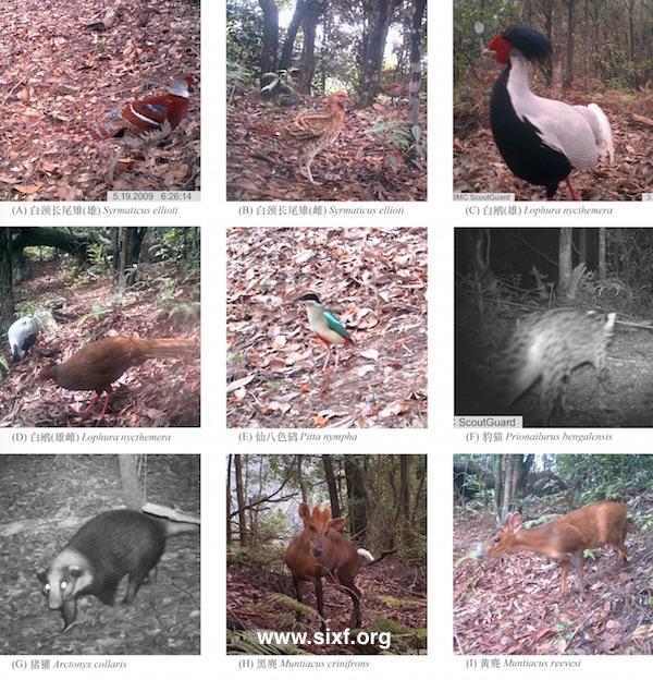 从左到右依次为:白颈长尾雉(雄)、白颈长尾雉(雌)、白鹇(雄)、白鹇(雌)、仙八色鸫、豹猫、猪獾、黑麂、黄麂