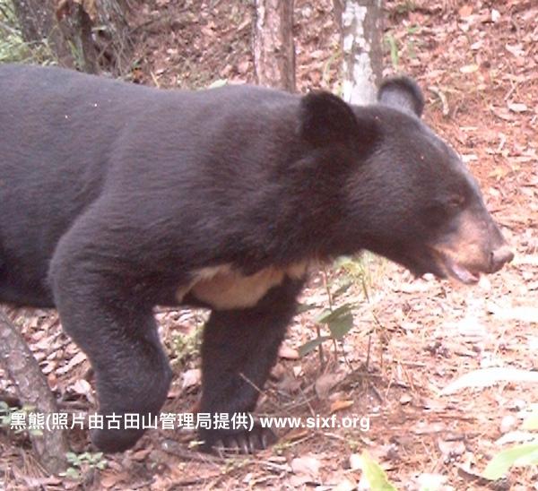 另眼相看古田山: 红外相机拍到的野生动物